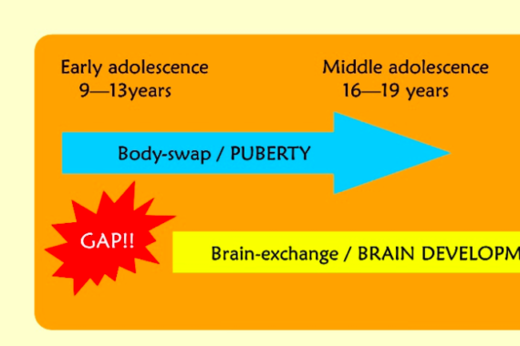 Illustration of the different steps in teenage development